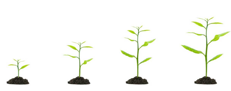Pflegeimmobilien als Kapitalanlage und ihre Alternativen im Vergleich